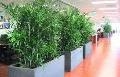 办公室装修植物风水布置注意事项